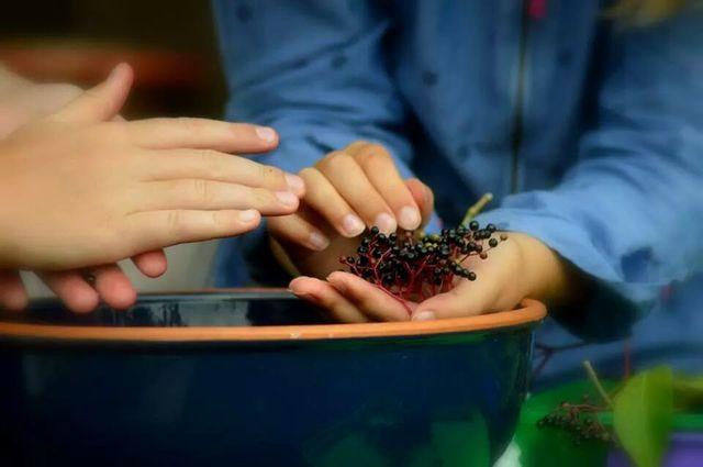 Elderberry cordial prep