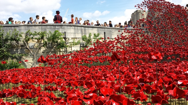 Beefeaters guide visitors across a sea of poppies