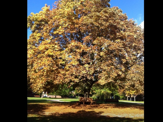 A special tree in Nottingham Park Estate