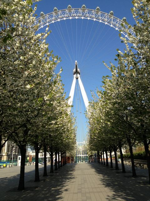 Spring blossom comes to London, at last