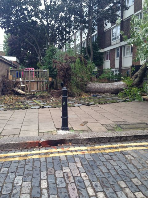 Fallen tree in a Hackney garden